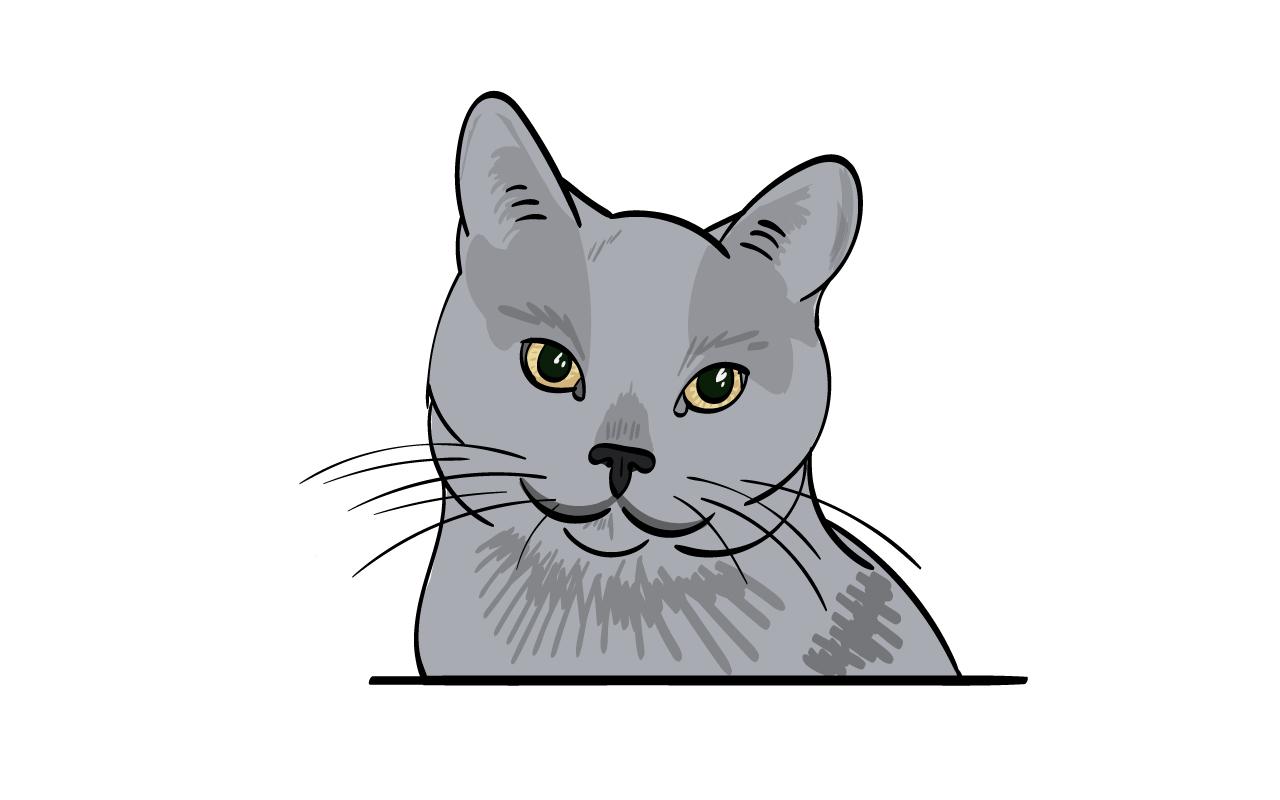 cat-zans