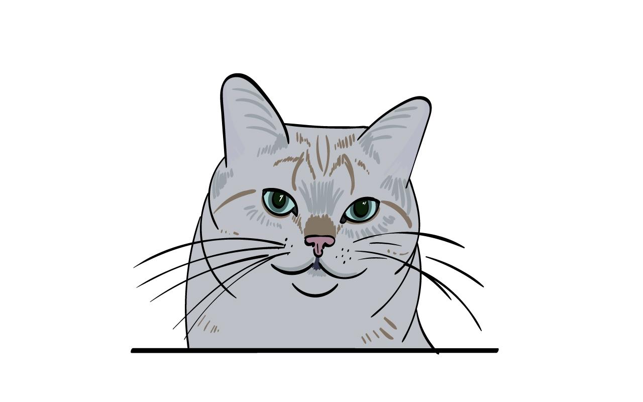 cat-zans2