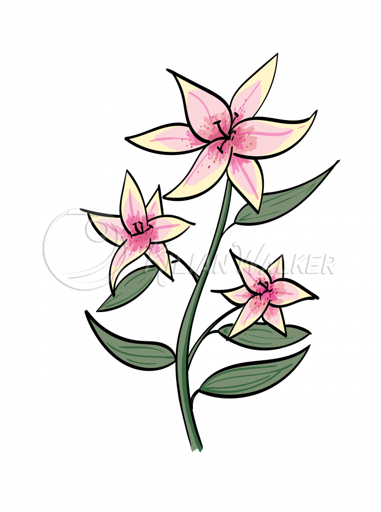 oriental-lily